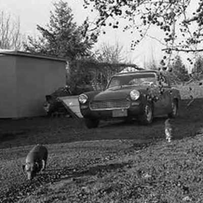 Shirly Kaul Bixby Dog and Car Photograph